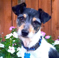 Monterey, CA -- 6-year-old Wrigley, a real sweetie-pie!