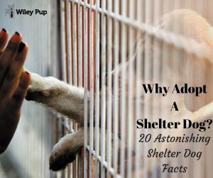 Listings by Location - The Senior Dogs Project