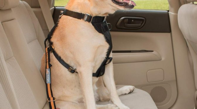 Traveling with Your Senior Dog…..