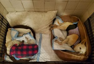 Candy and Sparky snug in their beds