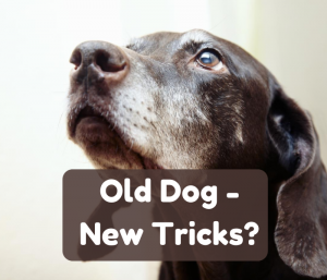 Can you train an older dog?