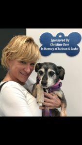 Senior dog volunteer foster