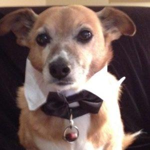 Gentleman Tux